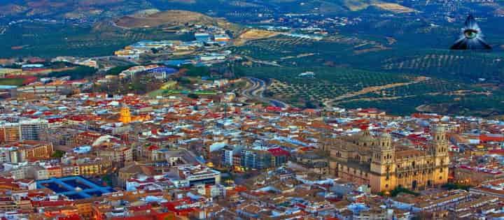 Vidente en Jaén
